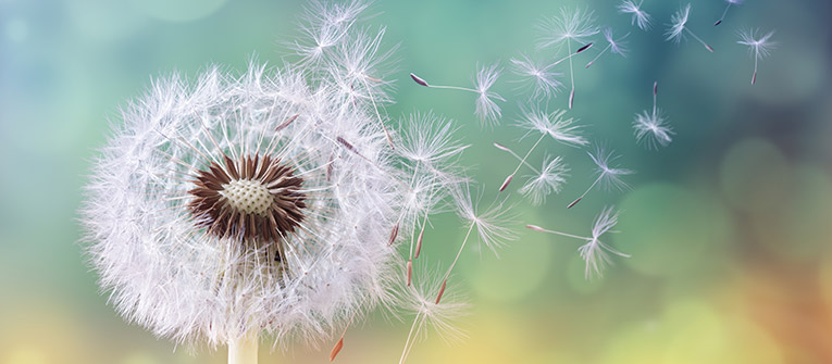 Why allergies are increasing